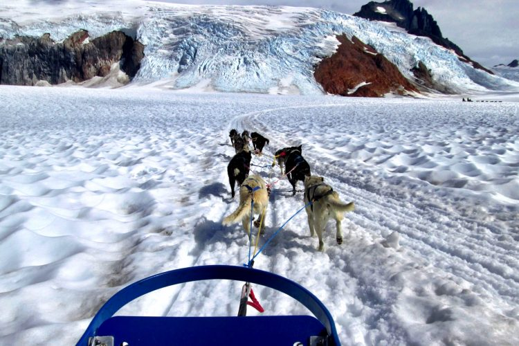 Dogsledding on Mendenhall Glacier in Alaska