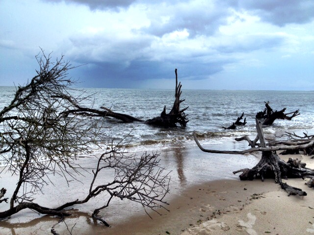 Boneyard Beach - Jacksonville Florida