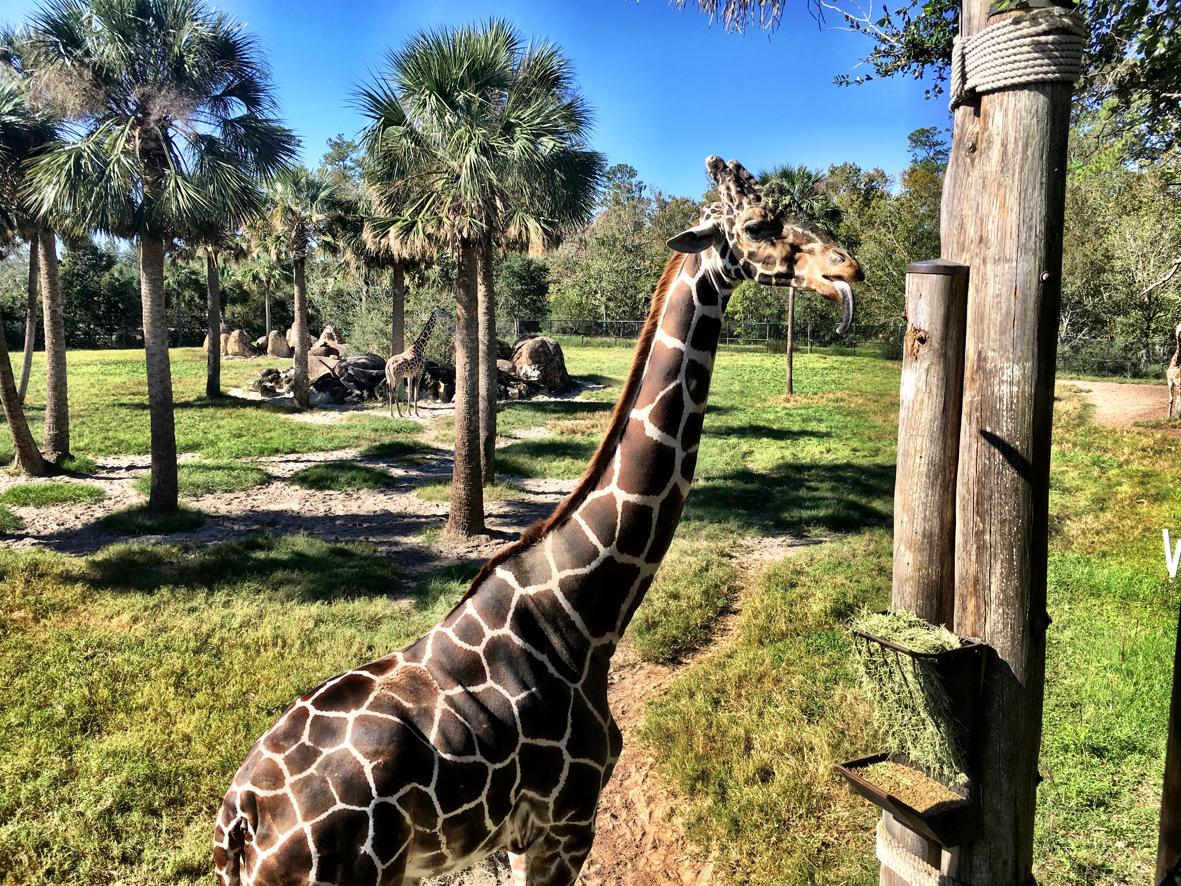Jacksonville Zoo - Florida