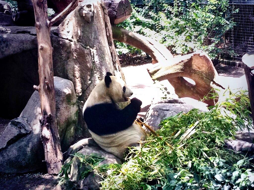 San Diego Zoo - San Diego - California