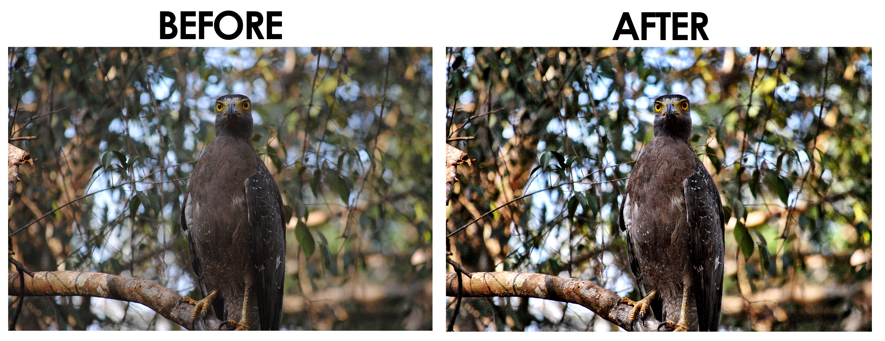 Serpent Eagle Before and After - Camera+ Photo App