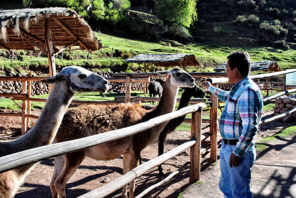 Alpaca Farm - Tour Guide - Peru - Sacred Valley