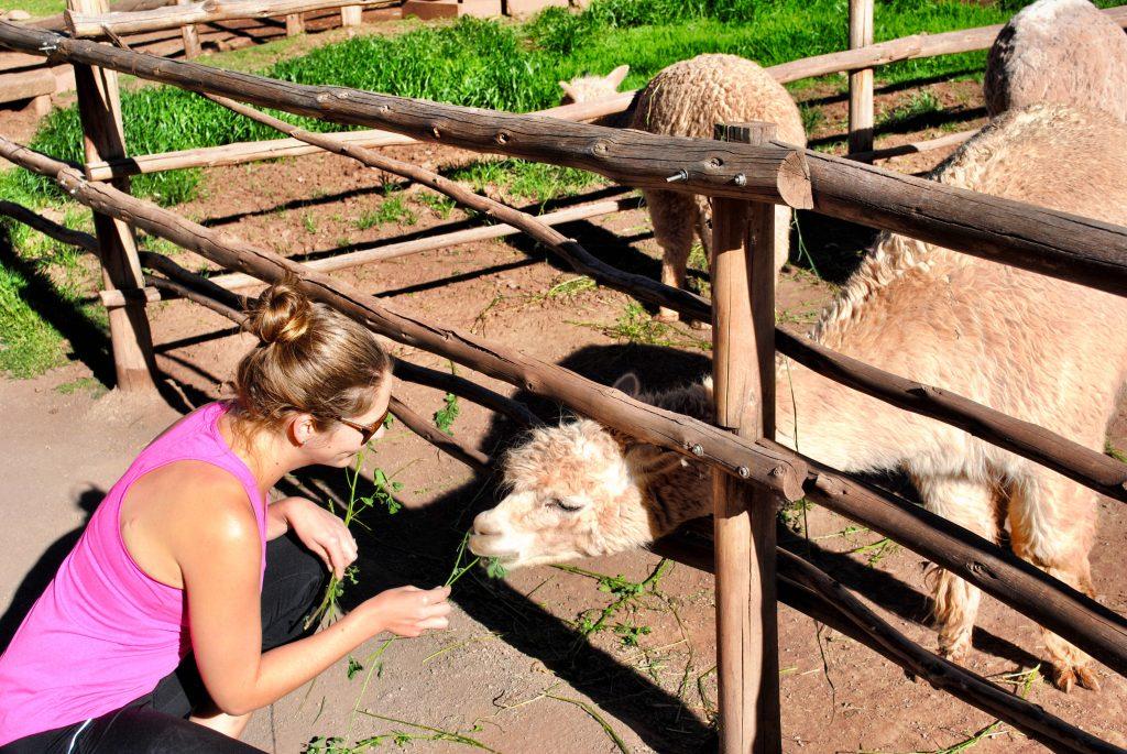 Awana Kacha Alpaca Farm - Peru - Sacred Valley