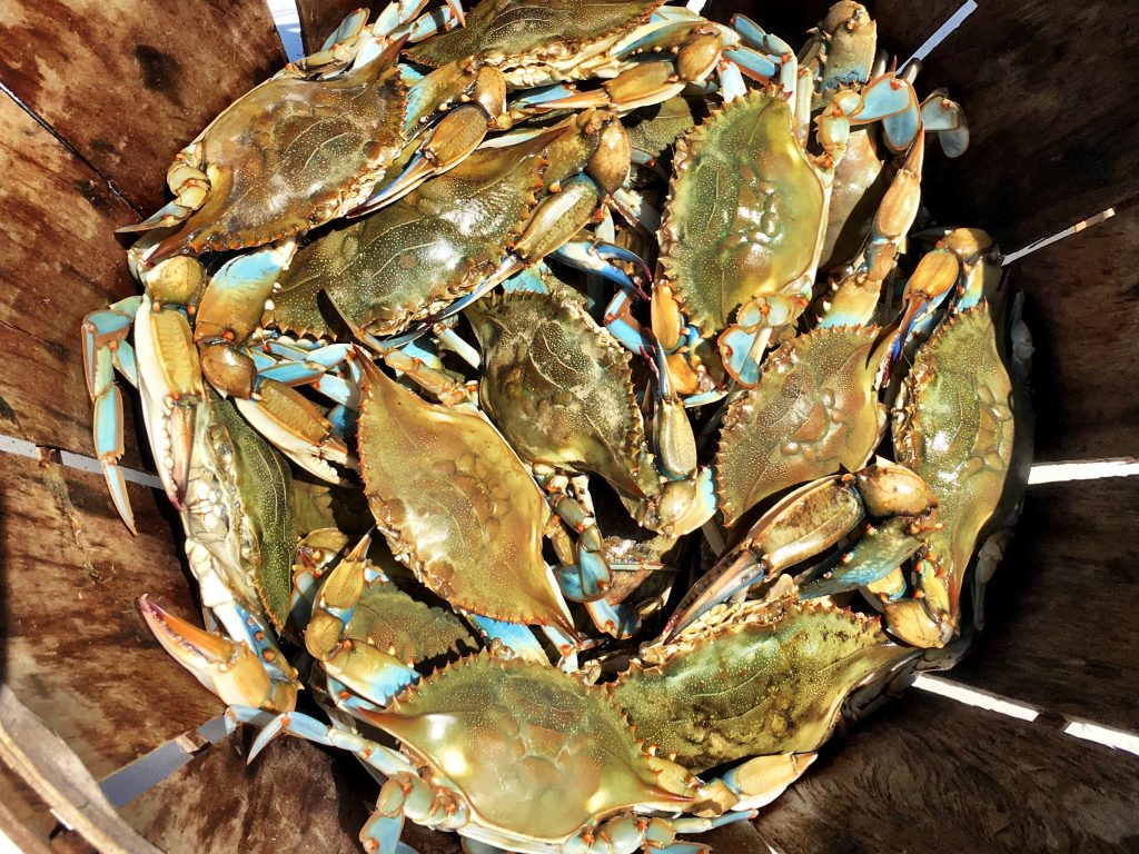 Maryland Crabs - Before