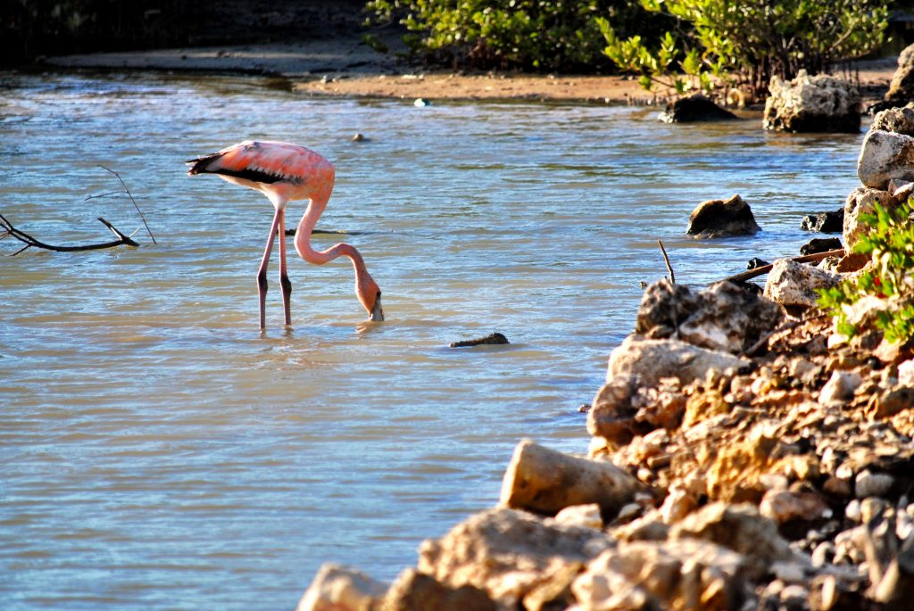 Curacao - Salt Flats - Flamingo Area
