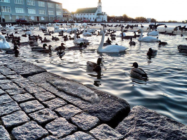 Iceland - Reykjavik - Tjornin Pond