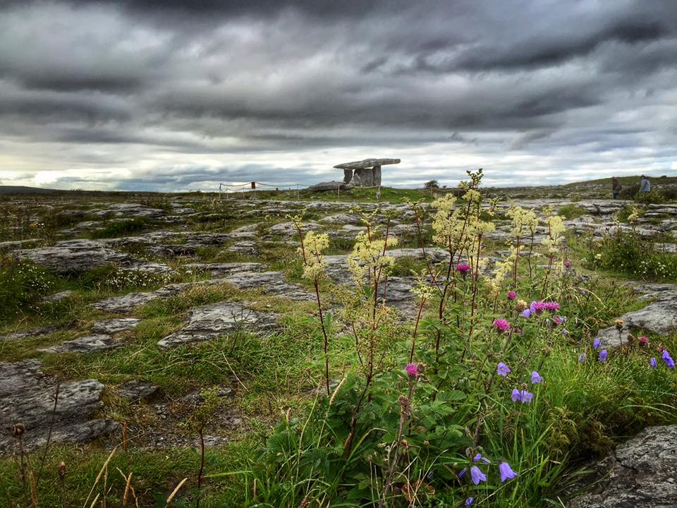 Ireland's Poulnabrone Dolmen is gorgeous when the wildflowers are blooming.
