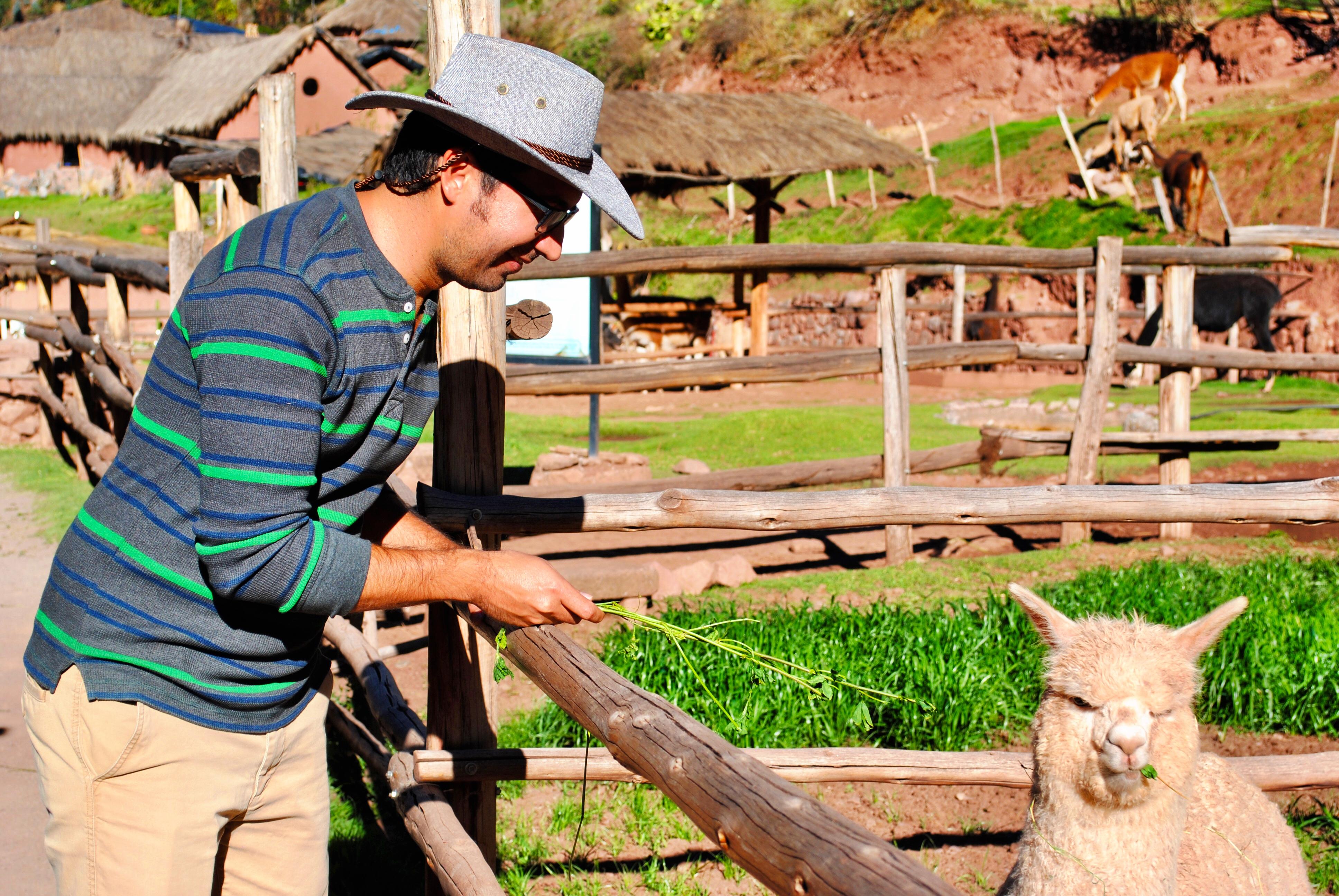 Awana Kancha Alpaca Farm in Peru