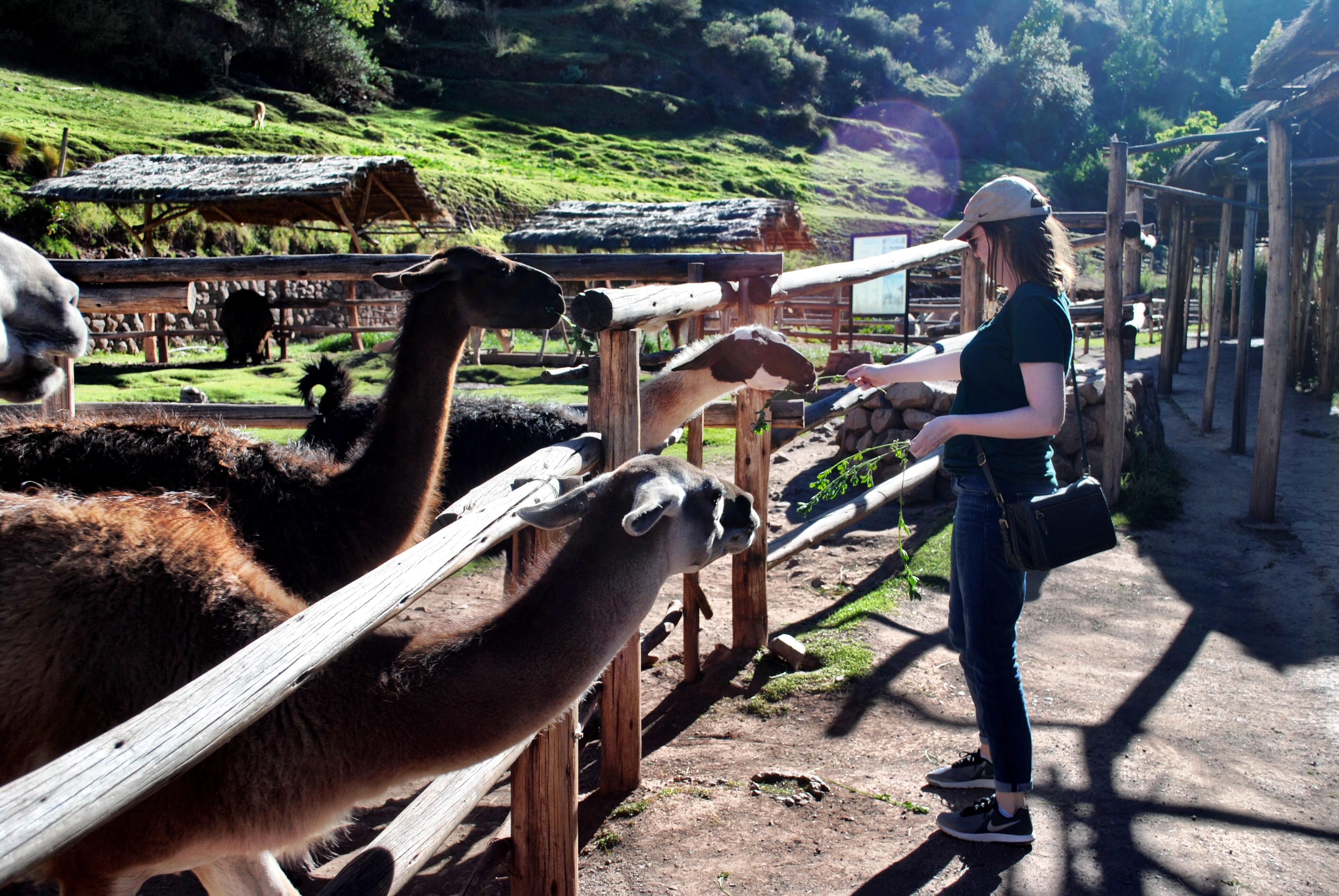 Peru's Awana Kancha Alpaca Farm