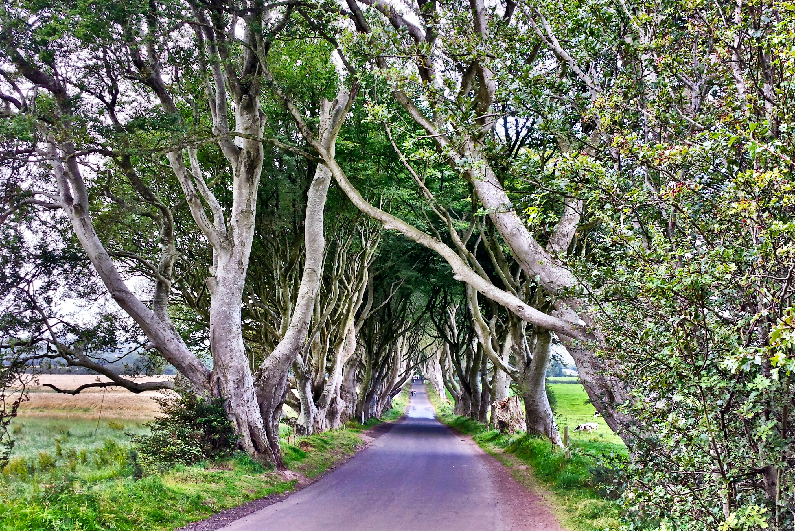 Game of Thrones fans need to visit the Dark Hedges in Ireland