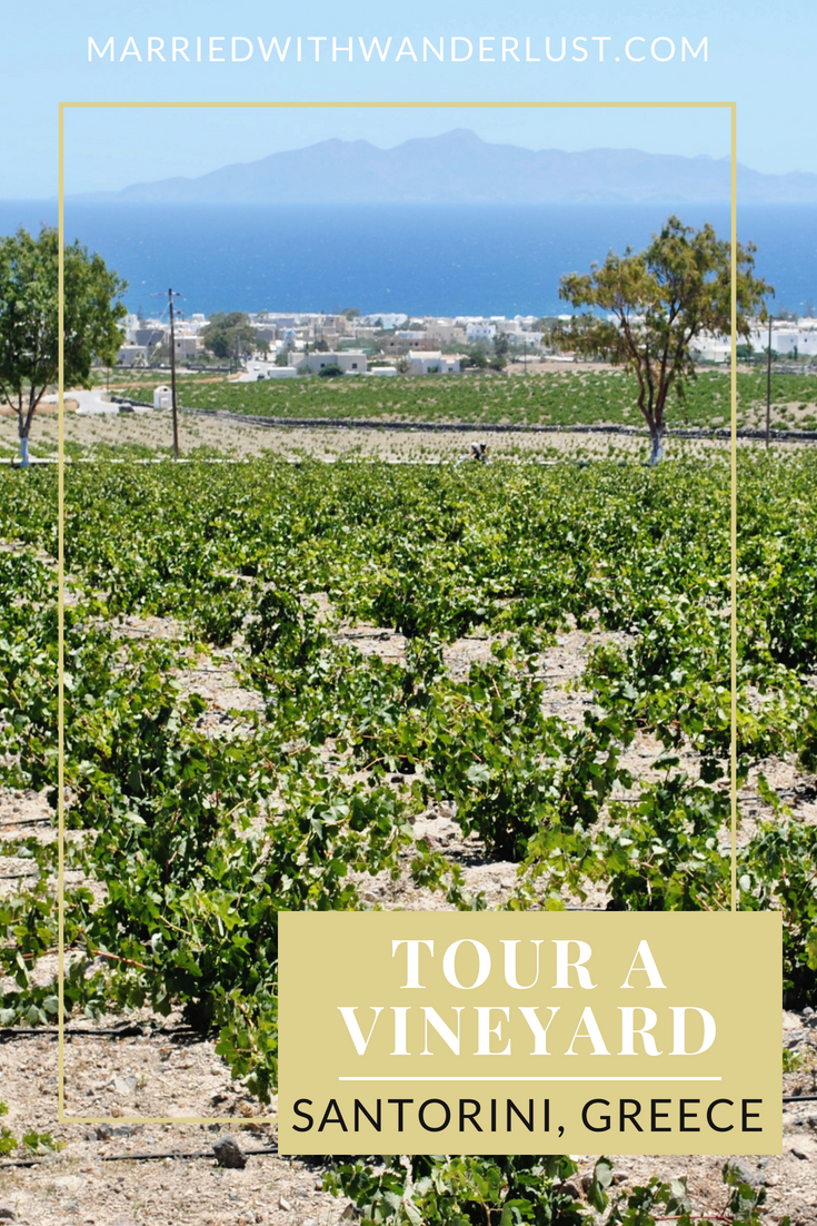 Tour a vineyard in Santorini, Greece