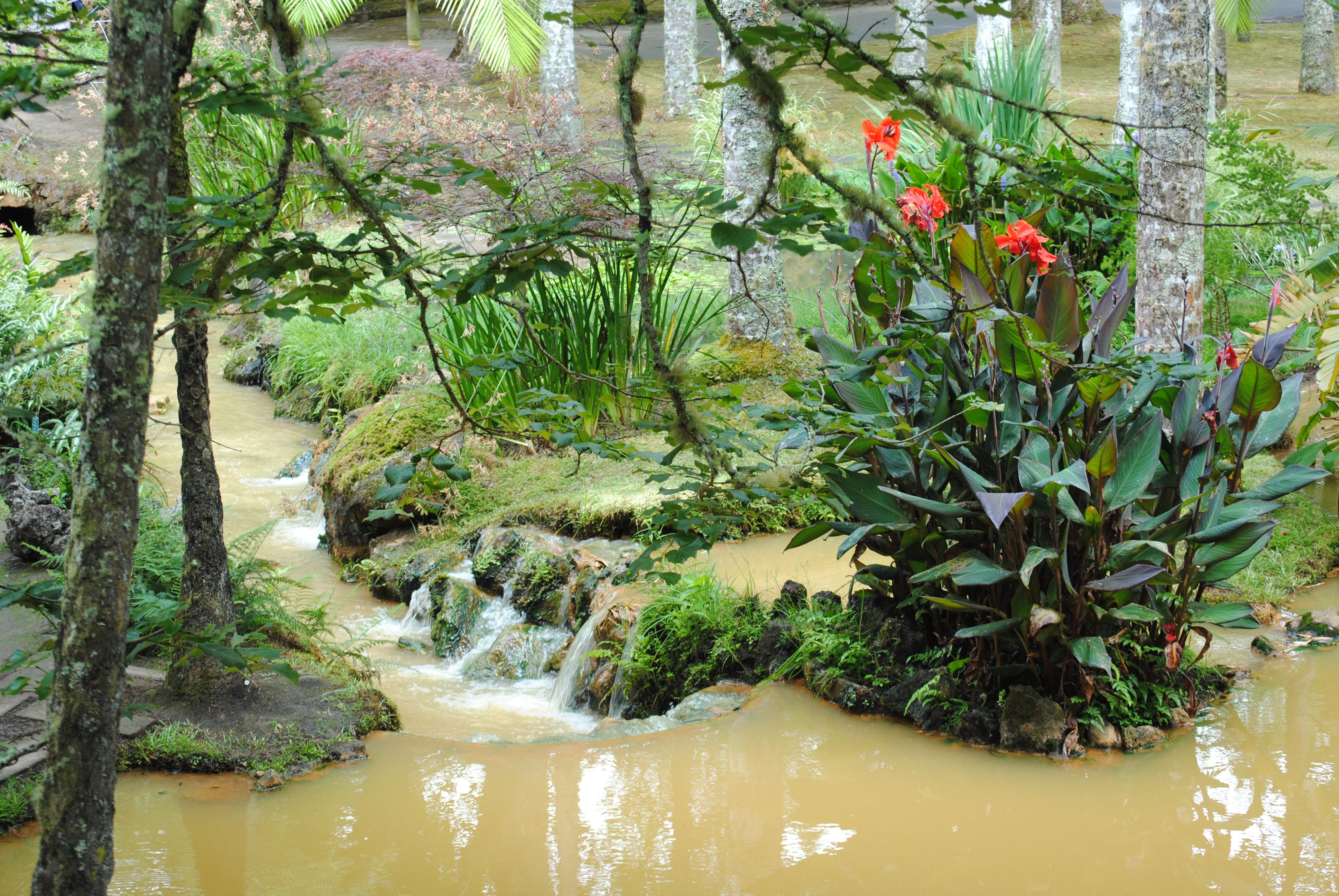 Botanical garden at Terra Nostra, Azores