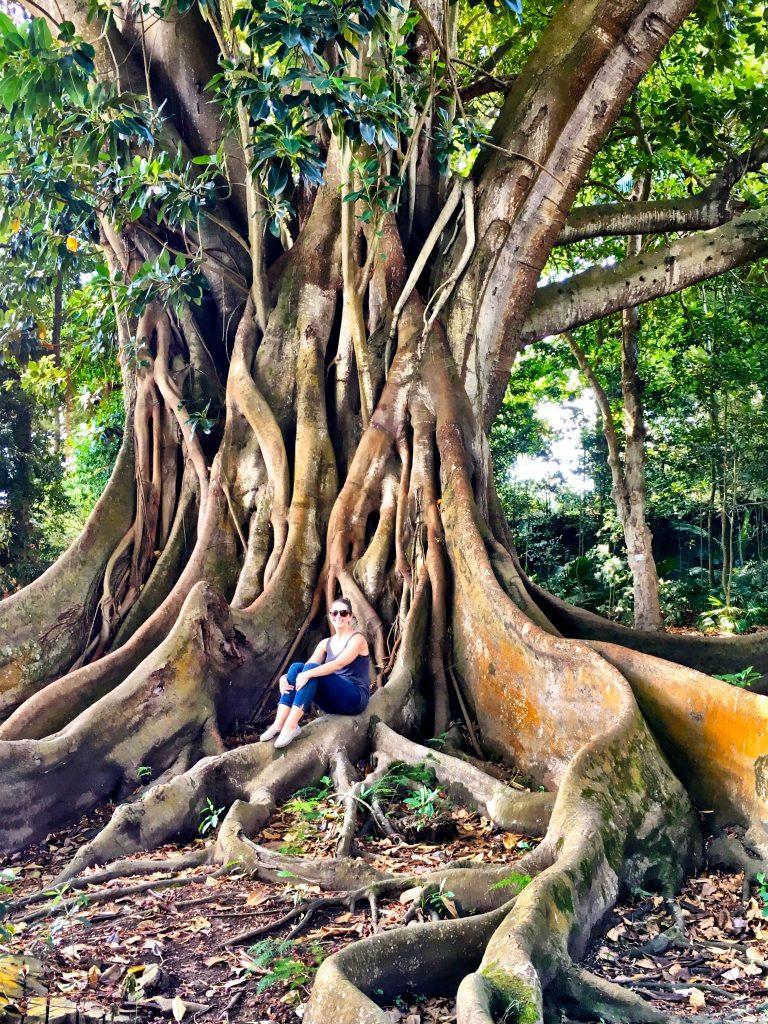 José do Canto Botanical Garden in Ponta Delgada, Azores