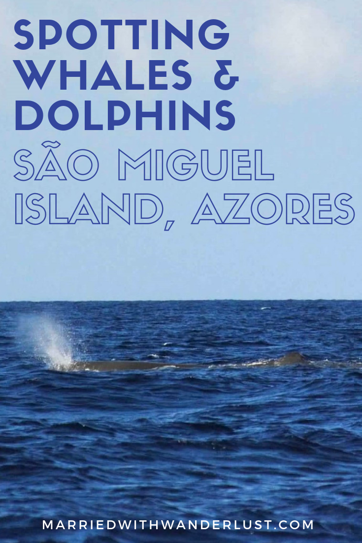 Whale watching in the Azores on Sao Miguel Island