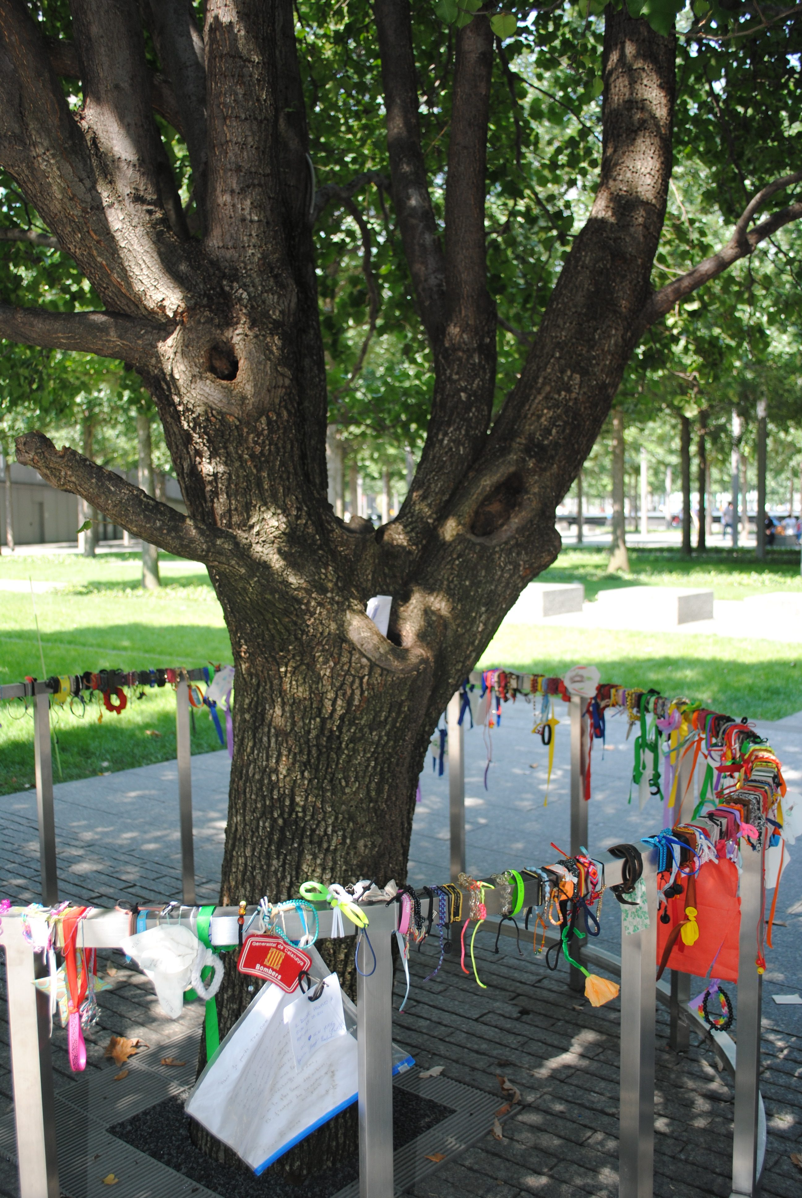 Survivor Tree at the 9/11 Memorial