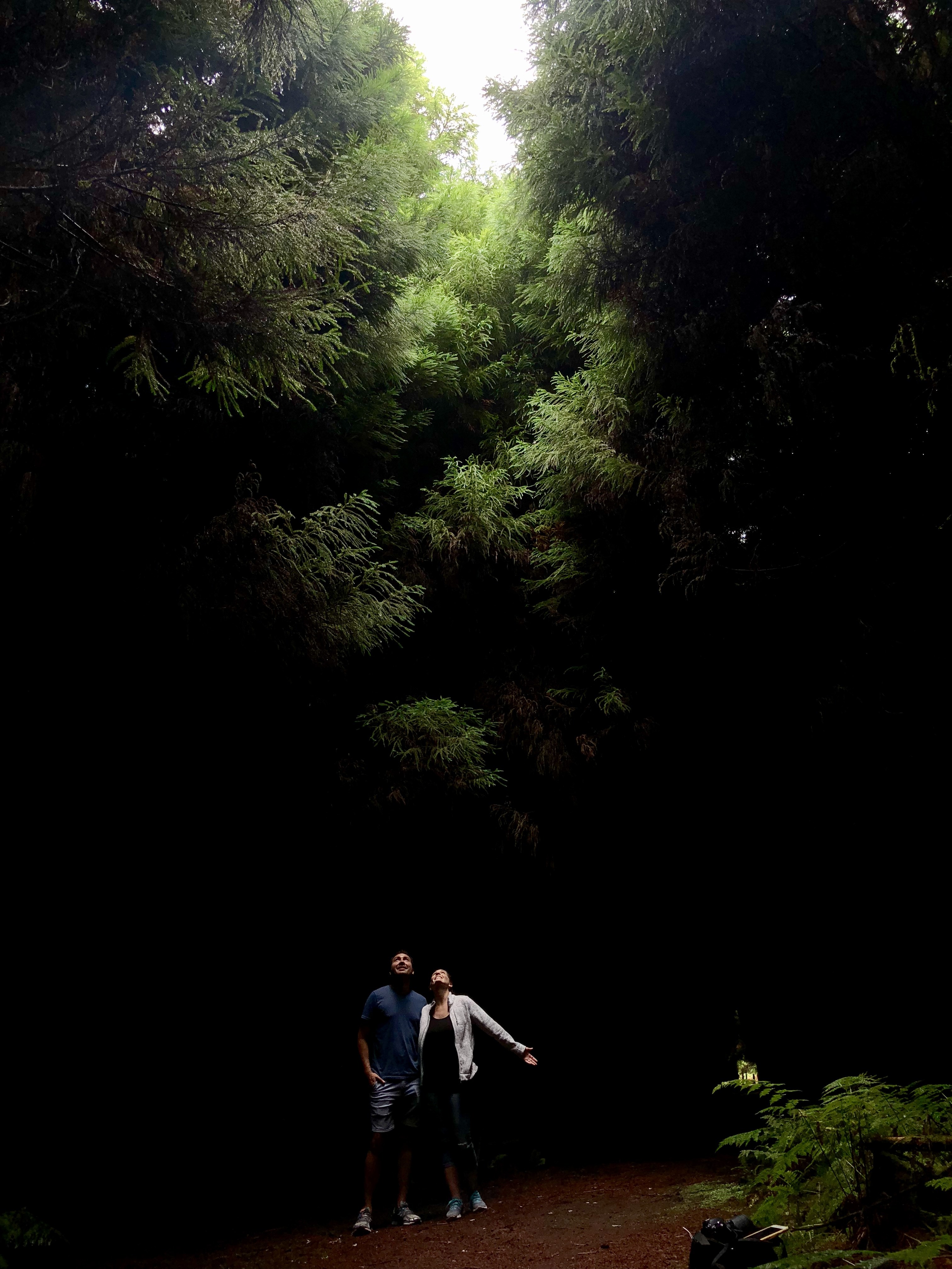 Great lighting in this forest on Terceira Island, Azores
