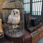 Find Hegwig at the Wizarding World of Harry Potter