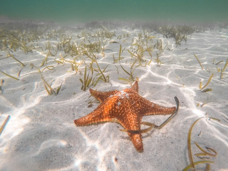 Starfish Point, Grand Cayman