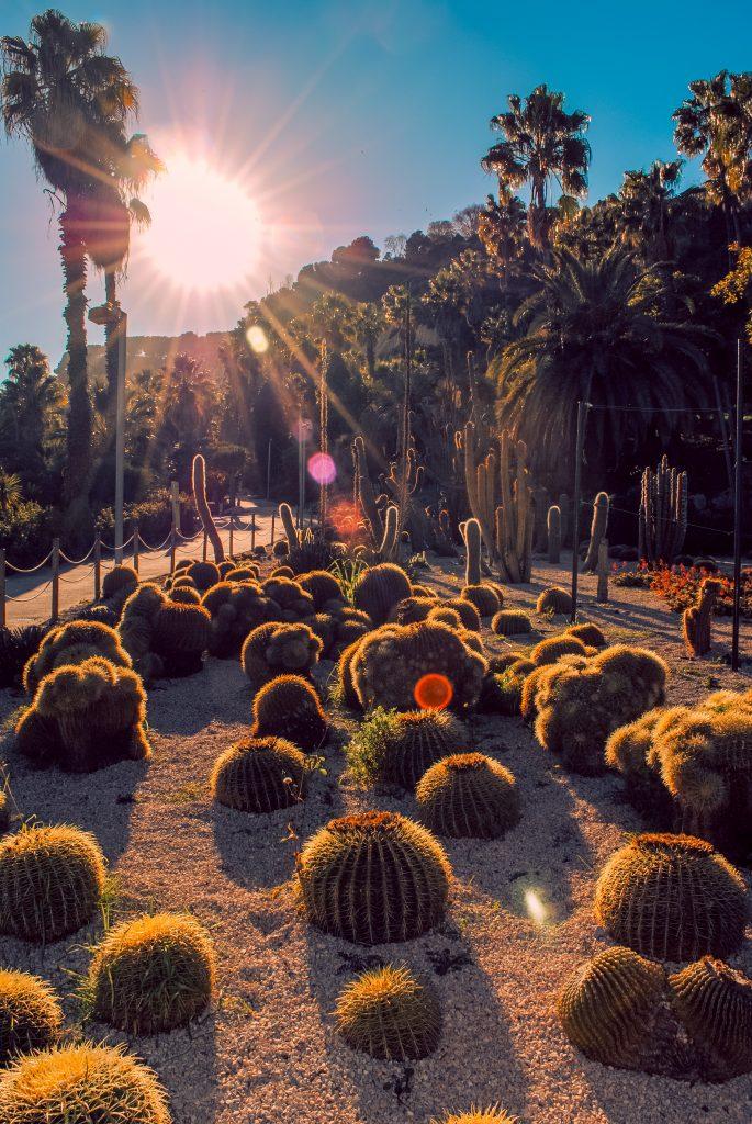 Cactus garden at Montjuïc Park, Barcelona