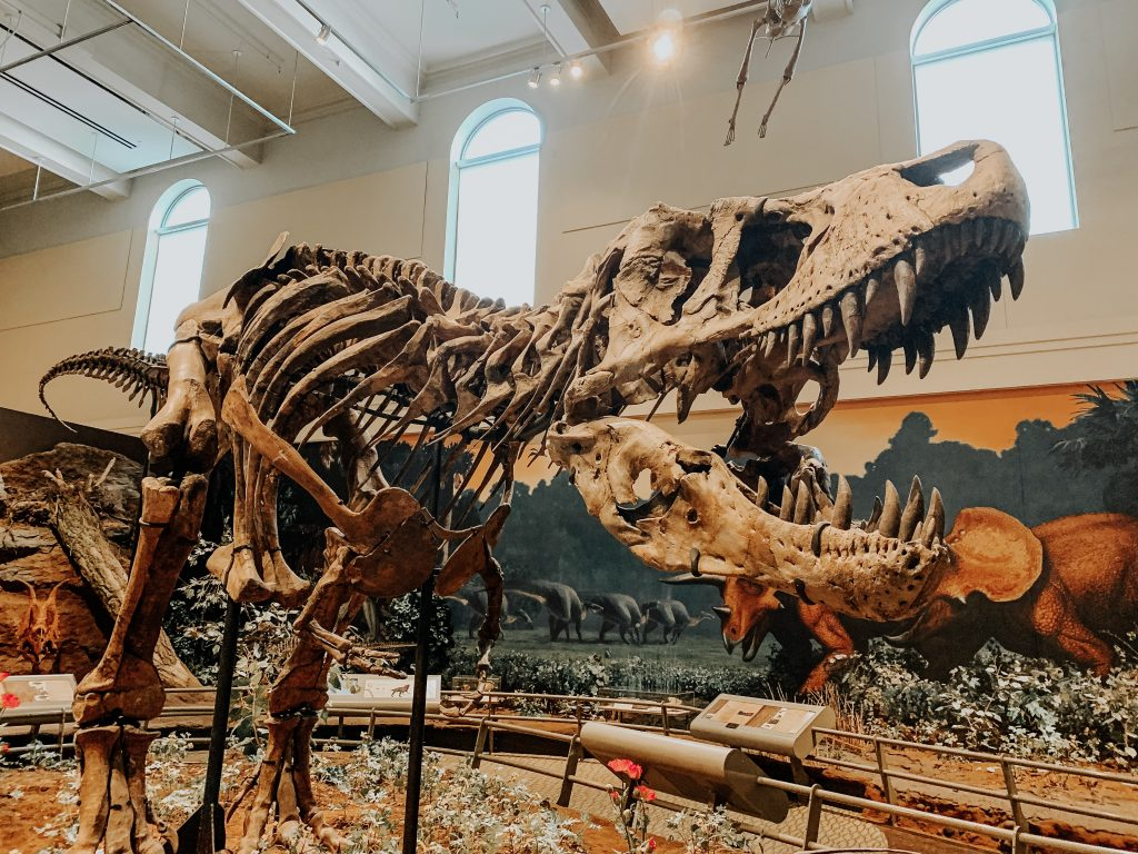 See the world's first discovered T Rex in Pittsburgh