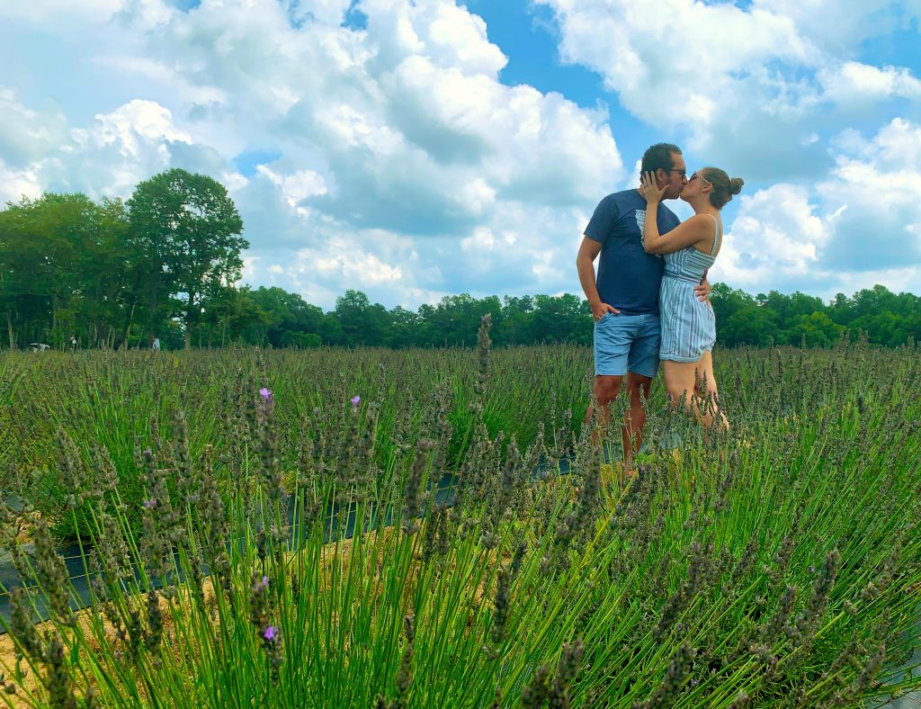 Sweethaven Lavender Farm in Williamsburg, Virginia
