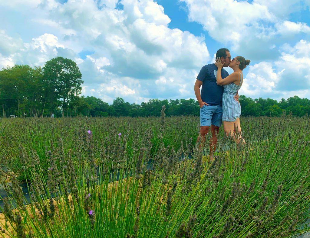 Sweethaven Lavender Farm in Williamsburg, Virginia