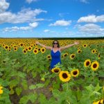 A spectacular sunflower field in Florida
