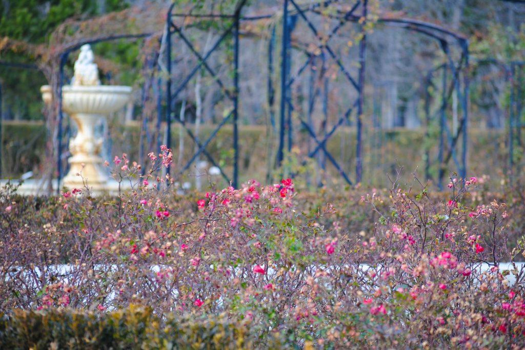 Roselada in Retiro Park