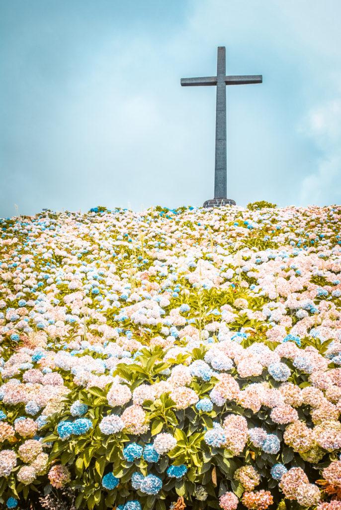 Hydrangeas outside Nossa Senhora da Paz, Azores